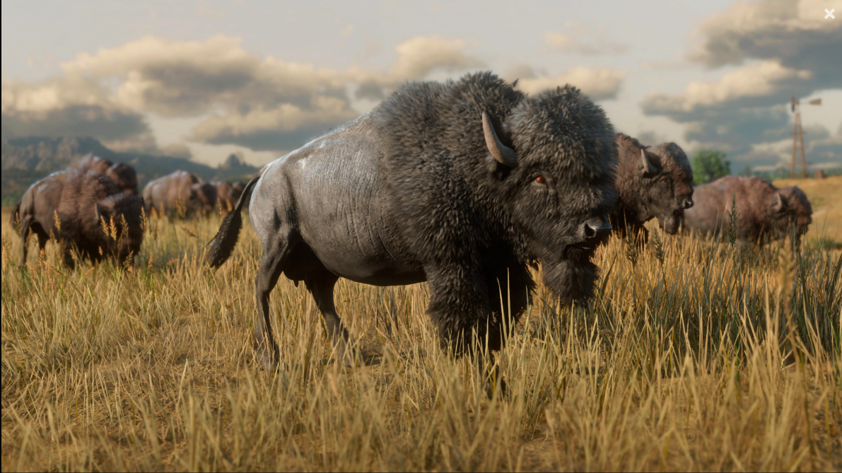 Red Dead Redemption II - Bisons