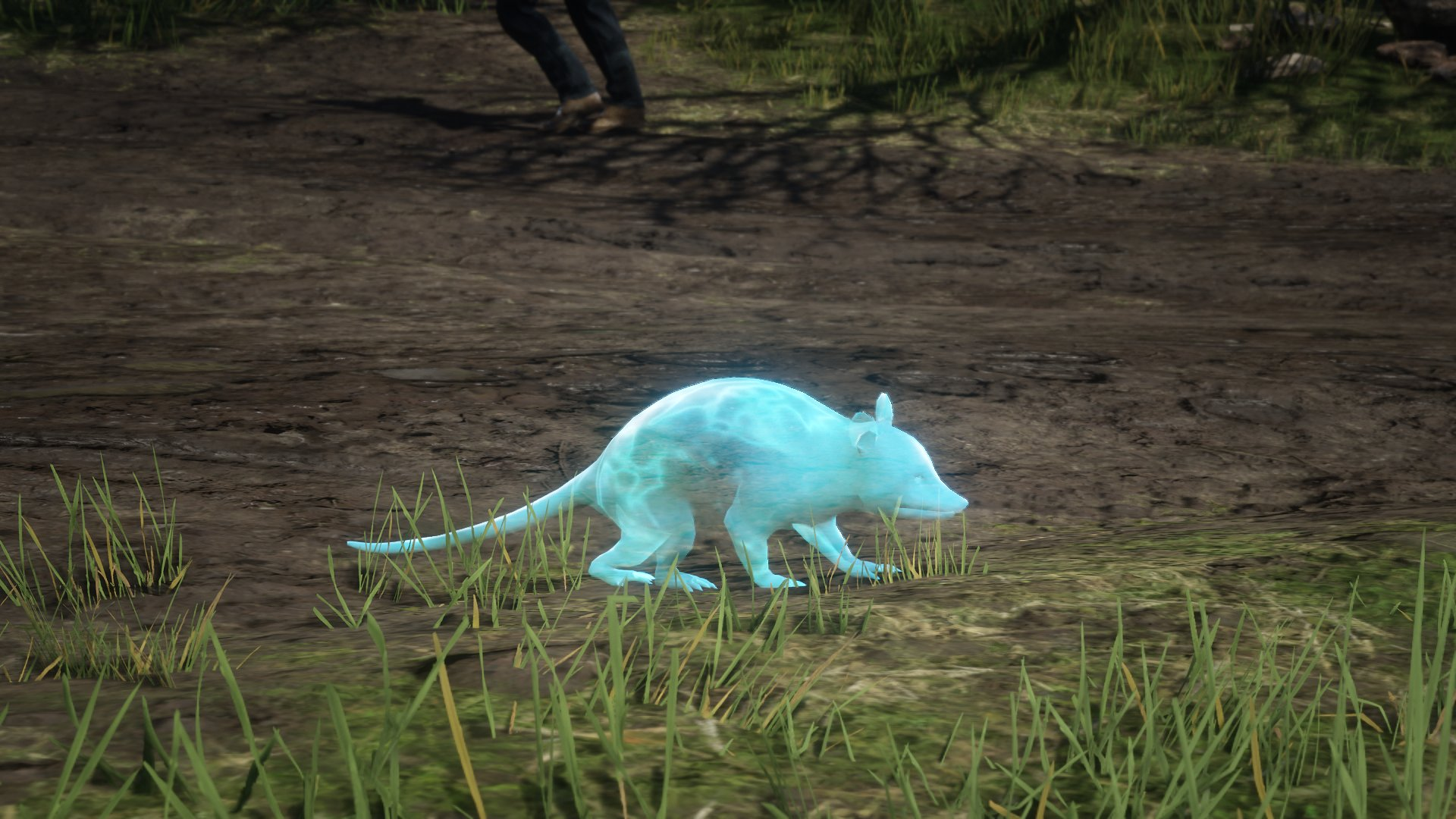 Animaux Fantomes Red Dead Online