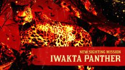 La panthère Iwakta apparaît dans Red Dead Online