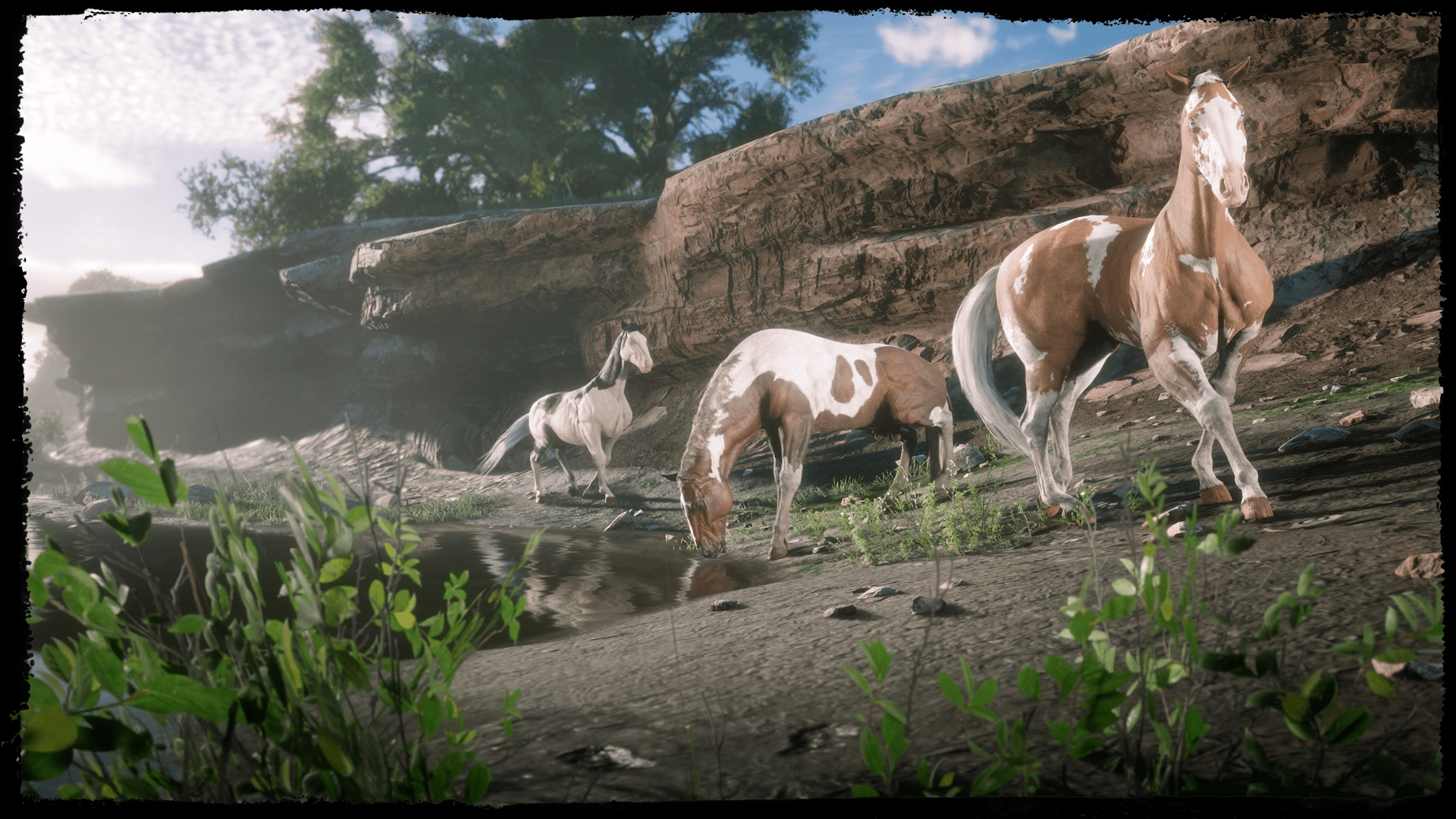 chevaux American Paint Red Dead Online